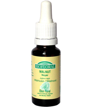 Biofloral Elixir Walnut n° 33 Noyer 20ml